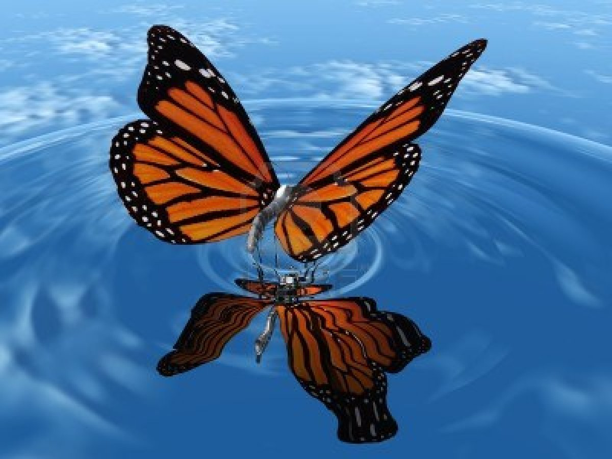 high-resolution-butterfly-images-5